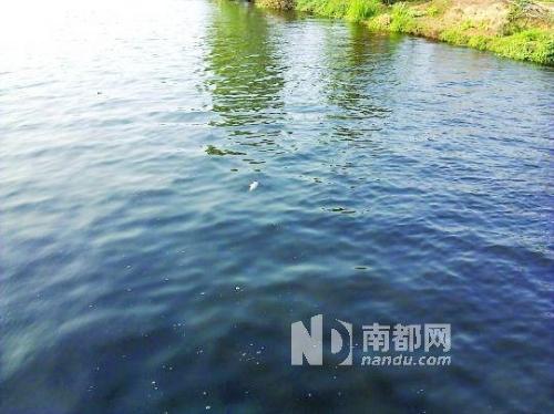 新开河水质目前暂时不适合游泳