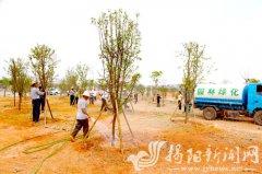 榕江新城环岛路景观绿化带塘埔